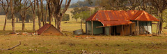 Along the Golden Highway (Darren Schiller) Tags: abandoned australia architecture building corrugatediron derelict disused decaying deserted dilapidated empty cassilis farmhouse farming galvanisediron history heritage house iron landscape newsouthwales old panorama rural rustic ruins rusty tin wreck