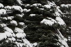 (Theresa Best) Tags: winter illinois canon snow nature adventure theresabest canont6s canon760d canon8000d explorecreatewonder mchenrycounty