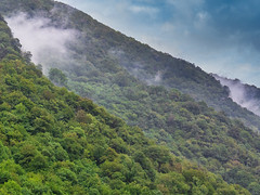 Foggy Forest (Oliver Weihrauch) Tags: wood fernweh zugrocken adventureculture picoftheday herzegovina blue forest fog europe konjic green wanderlust travelforlife bosniaherzegovina bosnia forestimages