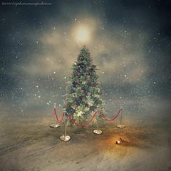 the last christmas tree (evenliu photography) Tags: photomanipulation photoshop photoedit photoart surreal christmas tree dream dreamscape evenliu art visual imagine