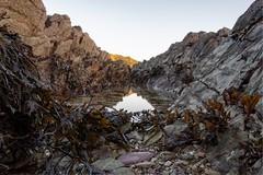 Rock Pool (Evoljo) Tags: tallandbay rockpool coast sea beach water rocks shells cornwall nikon looe d500