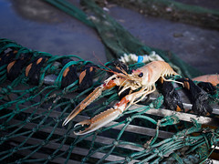 Norwegian lobster (FishAct) Tags: baltic campaign fischerei fishery gothenburg göteborg investigation schweden sweden