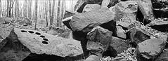 steinzeitbierdosenhalter (fluffisch) Tags: fluffisch darmstadt frankenstein eberstadt hasselblad xpan panorama 45mmf40 rangefinder messsucher analog film kodak trix400