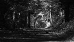 A walk on the Larry Scott trail (Matthew James Lewis) Tags: porttownsend blackandwhite trees trail beauty bokeh plants bw olympicpeninsula washingtonstate washington