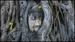 _SG_2018_11_0821_1_IMG_5563 (_SG_) Tags: bangkok suvarnabhumi holiday citytrip four cities asia asia2018 2018 capital thailand city ayutthaya temple phra nakhon si historical park wat sanphet