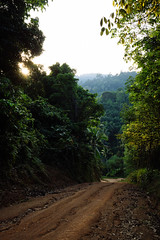 Jungle road, Ko Phangan (Thailand) (Steffen Kamprath) Tags: asia asie asien backlight carlzeisssonnarte1824za countryside day documentary emount island jungle kophangan kohphangan landscape light nature nopeople outside primelens rural sel24f18z scenery sonya6000 tailandia thailand thaïlande travel travelphotography tree vacation zeiss natural ประเทศไทย เกาะพะงัน