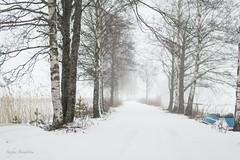 Misty day (lortopalt) Tags: misty foggy dimmig sjön snö snow winter vinter horndal rossen nikon d850 lortopalt
