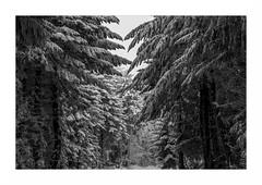 Paysage G27 Rt Bd Rd1 IMG_3171 (thierrybarre) Tags: neige sapin landscape mood graphisme lignes montagnes vieux texture alpes hiver