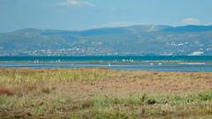 Birds at Oropos lagoon (apapac) Tags: oropos lagoon ωρωπόσ λιμνοθάλασσα πουλιά bird birdwatching greece oiseau grèce lagune