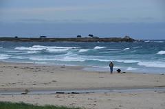 Asilomar dog walk (afagen) Tags: california pacificgrove asilomarstatebeach montereypeninsula asilomar beach pacificocean ocean
