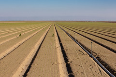 East to Alfalfa (Dan Brekke) Tags: farms agriculture centralvalley sanjoaquinvalley kingscounty california