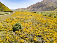 New Zealand (John De Gruyter Photography) Tags: fromtheair newzealand djimavic drone nz ashburton