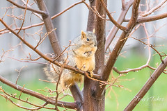Squirrel looking for a meal