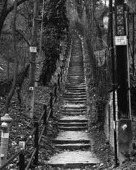 the way is up! (gallmese) Tags: buda budapest hungary magyarország lépcső stair staircase feketefehér blackandwhite blancoynegro siyahbeyaz schwarzweiss bianconero inthemiddleofthecity escaleras