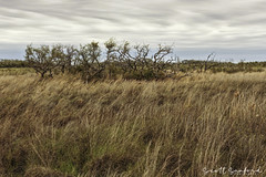 6D_Aransas (20)-Edit (Scott Sanford Photography) Tags: 6d canon eos landscape naturalbeauty naturallight nature outdoor springbreak texas topazlabs