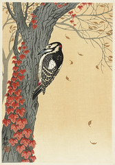 Great spotted woodpecker in tree with red ivy (1925 - 1936) by Ohara Koson (1877-1945). Original from The Rijksmuseum. Digitally enhanced by rawpixel. (Free Public Domain Illustrations by rawpixel) Tags: pdproject21batch2x otherkeywords tagcc0 animal antique art asian bird drawing greatspottedwoodpecker illustration japan japanese koson museum ohara oharakoson old paint rijksmuseum tree vintage