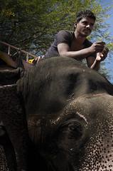 The Elephant's Eye (wordster1028) Tags: india2018 elephant eye memory mahout