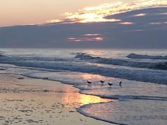 IMG_5092 (francesxcabrini) Tags: chincoteague assateague island ocean sea sunset beach