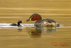 IMG-20171229-WA0035 (TARIQ HAMEED SULEMANI) Tags: sulemani tariq tourism trekking tariqhameedsulemani winter wildlife wild birds nature nikon