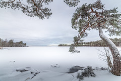 Swedish Winter (J. Pelz) Tags: landscape winter nature växjö sweden tree lake snow winterscene ice kronobergcounty se