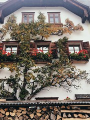 (Kristen Leary) Tags: hallstatt austria europe europetravel landscape landscapephotography fall autumn colors nature outdoors nikon nikond3300 nikonphotography world explore adventure travel photography photographer youngphotographer house vines