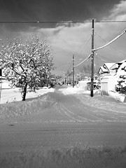 Down the Road in the Snow 2 (sjrankin) Tags: 6january2019 edited kitahiroshima hokkaido japan grayscale argent norio animal cat floor livingroom mat bench chigura snow weather snowfall clouds neighborhood houses trees lines wires cars