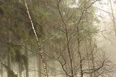 rainforest (Karsten Höhne) Tags: wald regen tropfen alverdissen lippe deutschland