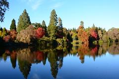 Autumn, Sheffield Park. (martin 123) Tags: nationaltrust nikon nikond7100 d7100 sussex sheffieldpark autumn colour