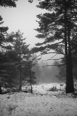 L1009956 (Sonsoles Huidobro) Tags: leicam10 elmarit24 nieve nieblas snow fog landscape