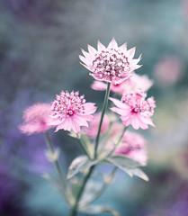 Pink (shcherbak_anastasia) Tags: nature flower