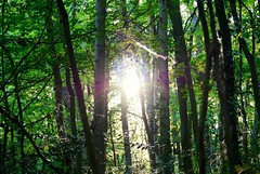 Sun Breeze Trees (Leigha Louisee) Tags: nature trees woods woodland tree sun sunshine green