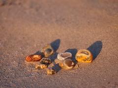 P1118340 (carlo) Tags: panasonic g9 dmcg9 africa africanlandscape namibia agatebeach beach agate