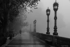 Alameda Apodaca (AvideCai) Tags: avidecai bn blancoynegro calle cádiz niebla tamron2470 absoluteblackandwhite
