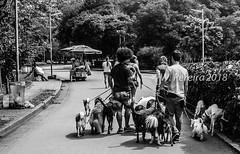 Parque Ibirapuera (W. Pereira) Tags: brasil brazil sampa sãopaulo wpereira wanderleypereira ibirapuera nikon parque parqueibirapuera wpereiraafotografias wanderleypereirafotografias