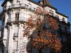 DSCN7924 (keepps) Tags: switzerland suisse schweiz vaud fall autumn nyon