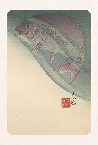 46-Carte postale // 10x15cm // Fish in Water