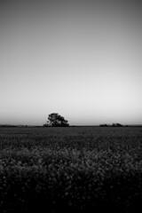 *** (Misha Sokolnikov) Tags: sunset minimal ca california leica leicamonochrom leicamm leicamsystem leicacamera 50mm aposummicron