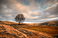A Lone Tree Landscape (Missy Jussy) Tags: lonetree tree landscape lancashire land northwest england sky sunset clouds fields hills rochdale pennines canon tamron1024mm tamron1024 tamron canon600d canoneos600d outdoor outside countryside rural atmosphere walkinglandscape moodylandscape