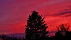 Fire In The Sky (obscure.atmosphere) Tags: himmel heaven sky cielo cieux 天 하늘 wolken clouds nubes nuages 雲 구름 sonnenschein sonnenlicht licht light ligero lumiere 光 빛 sunlight sunshine dusk abend sonnenuntergang 日没 일몰 twilight dämmerung 夕暮れ 황혼 sundown sunset evening sun sonne 日 태양 sunny sonnig anochecer atardecer ocaso sol crepuscule soleil atmosphere atmospheric atmosphäre atmosphärisch baum bäume tree trees conifer evergreen natur nature naturista naturaleza 自然 자연 herbst autumn otono automne 秋 가을 hamburg rissen deutschland germany schön nice