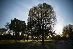 Washington DC (Brieuc.Baillot) Tags: usa washington dc columbia us united states unitedstates america sun sunset nikon d600 sigma 2470 city mall trees park bluesky