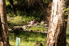Exploring (David Redfearn) Tags: merricreek exploring waterway coburg creekside springafternoon children childrenplaying naturephotography outside