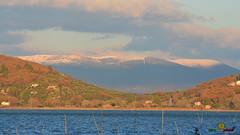 A-LUR_1948 (OrNeSsInA) Tags: trasimeno lago umbria italy italia nature aironi byrdaironi ornessina