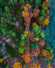 Falling (Daniel000000) Tags: trees fall road lake water art colors autumn dji drone spark forest nature landscape view new old green orange yellow explore adventure wisconsin stevenspoint stevens plover midwest northwoods woods north up trail