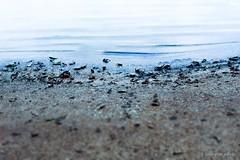 sand (1200yen) Tags: beach beaches playa canary spain landscape canon 6d paisaje costa orilla del mar aire libre arena océano agua bahía litoral ola eos 4000d