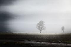 s u s s u r r i  . il lato silenzioso delle cose (swaily ◘ Claudio Parente) Tags: nebbia nebla tree alberi atmosfera d500 nikon swaily claudioparente abruzzo marsica