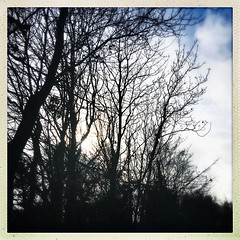 Winter Sun Silhouettes (JulieK (thanks for 8 million views)) Tags: 100xthe2019edition 100x2019 image12100 trees silhouettes squareformat hipstamaticapp 2019onephotoeachday tinternwoods sun branches