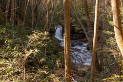 DSC01221 (PsycDocF) Tags: chattahoocheeoconeenationalforests autumn ravensclifffalls northgeorgia georgia