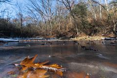 Lapham Delafield Segments Ice Age Trail-32.jpg (NetAgra) Tags: waukeshacounty frosty kettlepond color orange autumn iceagetrail frozen leaves cold novermber brown fall oak red