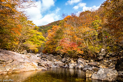 Piagol Valley in Jirisan National Park during autumn (patuffel) Tags: piagolgyegok valley 피아골계곡 autumn jirisan national park korea south foliage leica 28mm m10 summicron forest river rocks tree maple leaf leafes