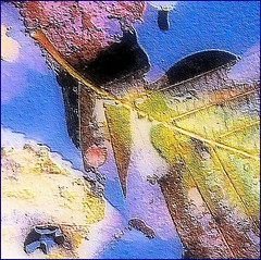 Abstract leaves (Anders Bjellerup) Tags: water leaves autumn fall